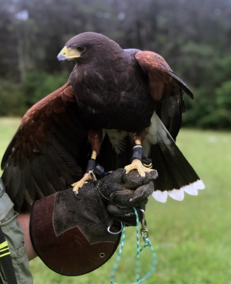 Close Hawk