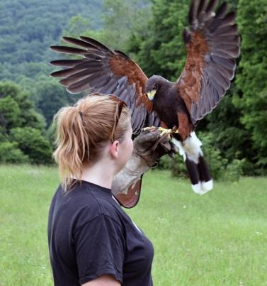 Maggie recieving Hawk